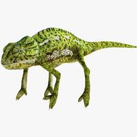 Chameleon 3D models