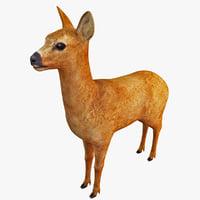 roe deer 3D models