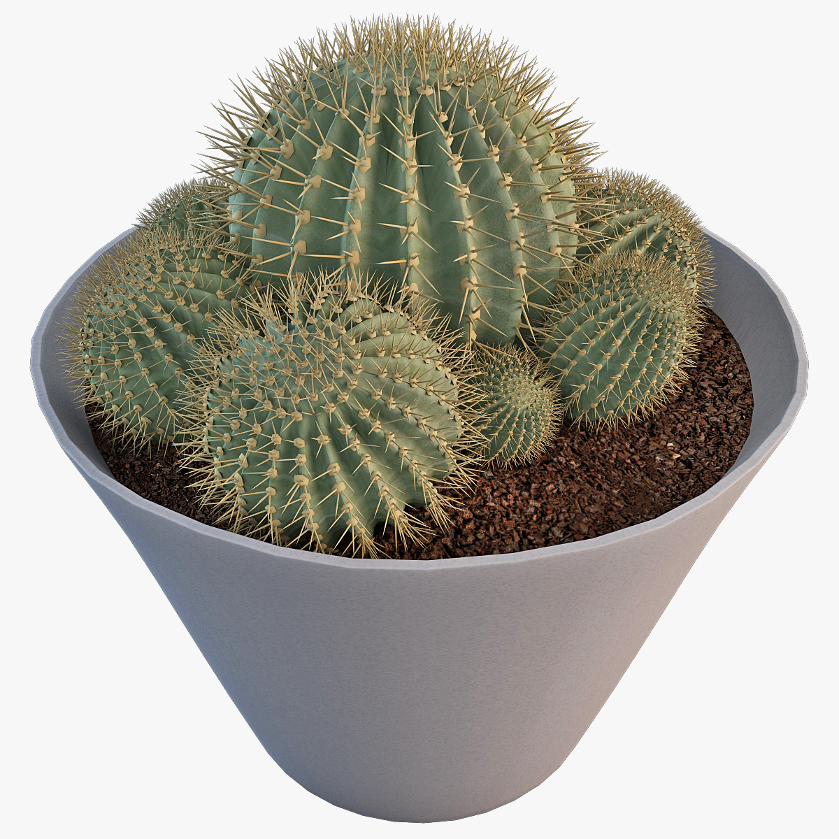 101980_Cactus_Epiphyllum_Sp_v2_000.jpg