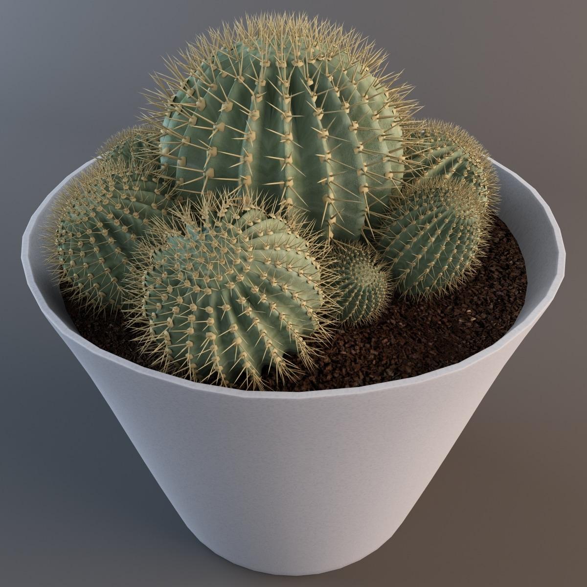101985_Cactus_Epiphyllum_Sp_v2_005.jpg