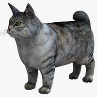 Kurilian Bobtail 3D models