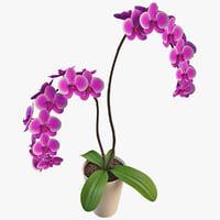 orchid 3D models