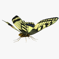 Swallowtail Butterfly 3D models