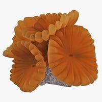 Fox Coral 3D models