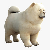 Chow Chow 3D models