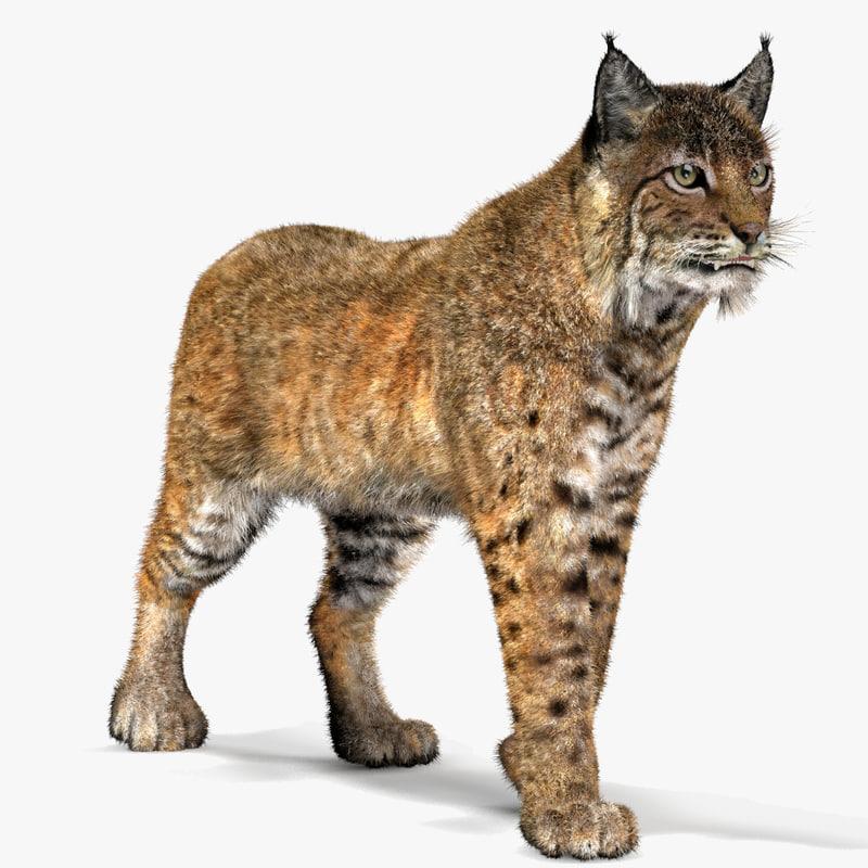 Bobcat-01.jpg