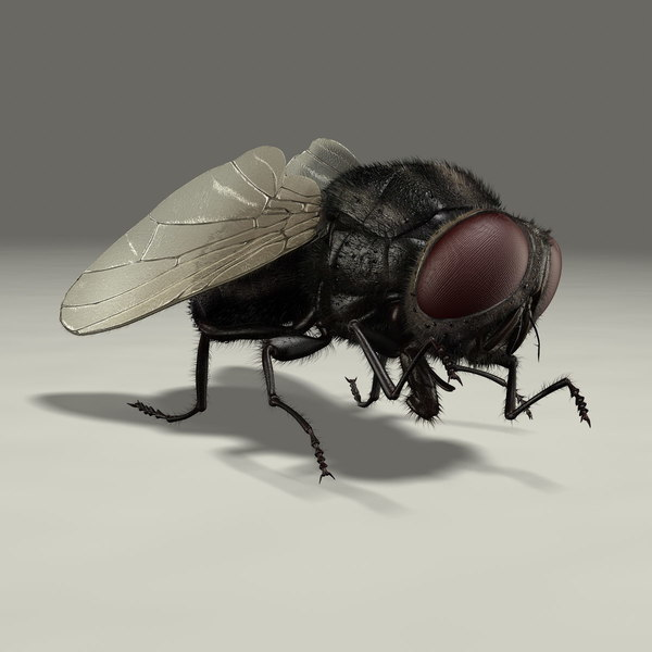 Housefly (ANIMATED) (FUR) 3D Models