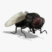 fly 3D models