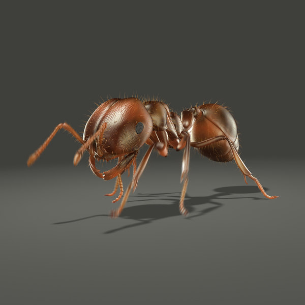 Fire Ant (ANIMATED) 3D Models