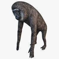 Gibbon 3D models