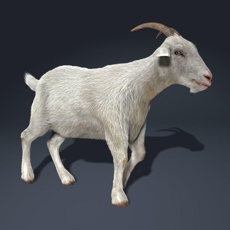 goat fur animation 3d model Goat Animation