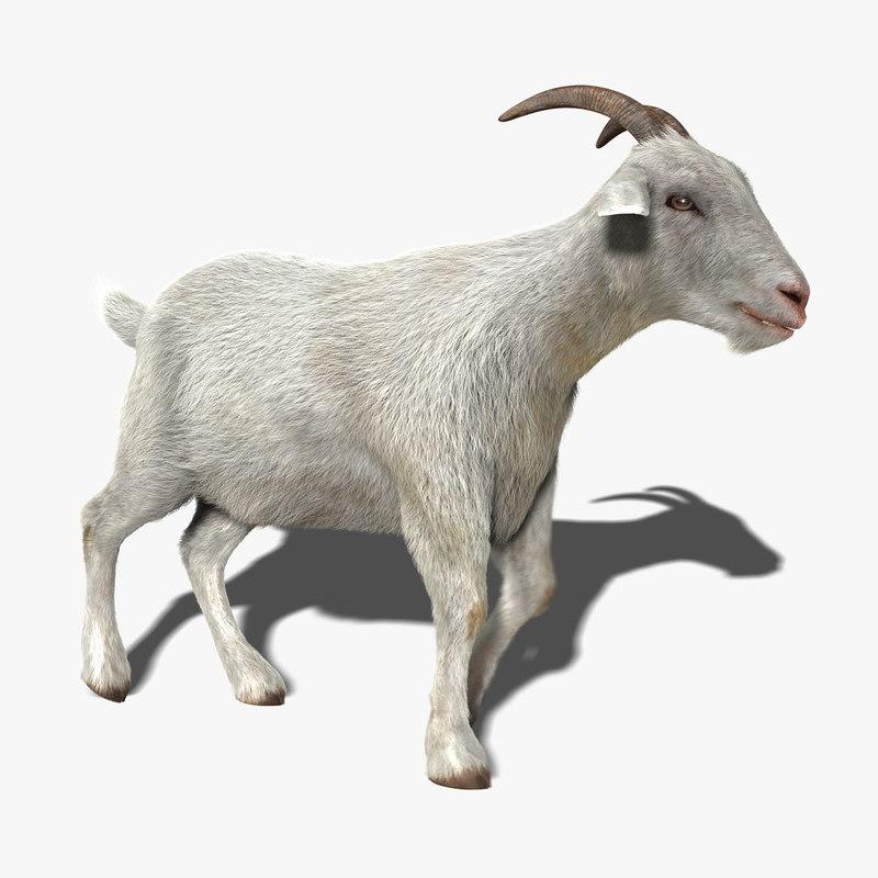 goat fur animation 3d ... Goat Animation