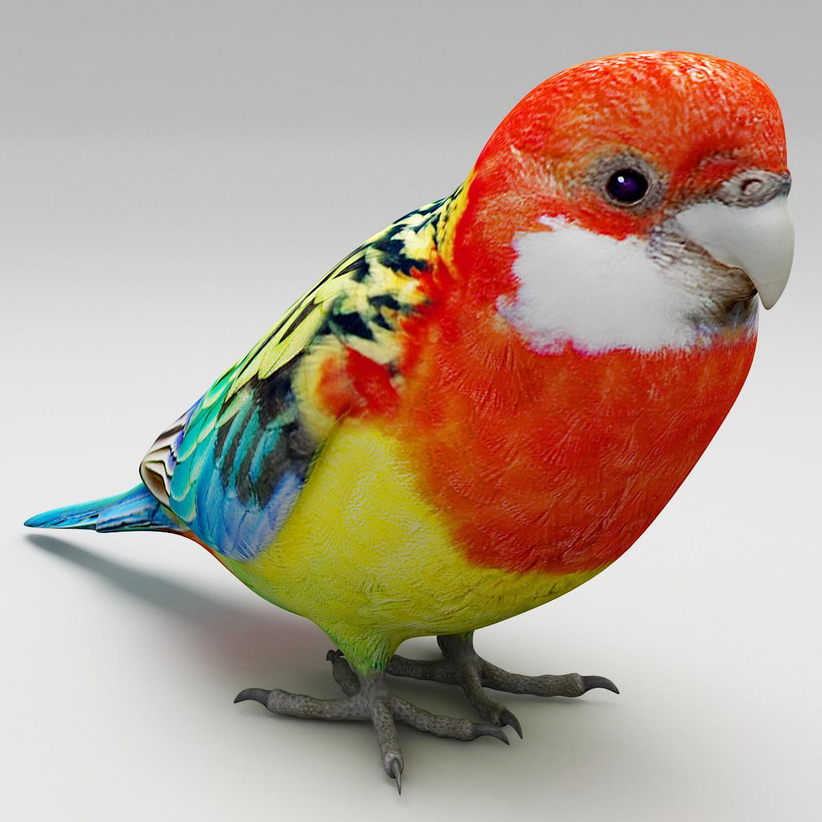 eastern rosella bird 3d model