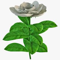 Gardenia 3D models