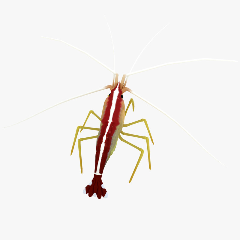shrimp R2s3.jpg