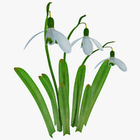 Snowdrop Flower 3D models