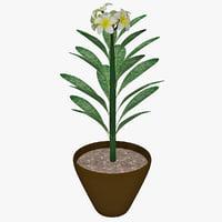 Flower Pot 3D models