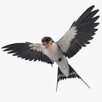 Swallow 3D models