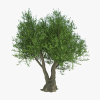 fruit tree 3D models