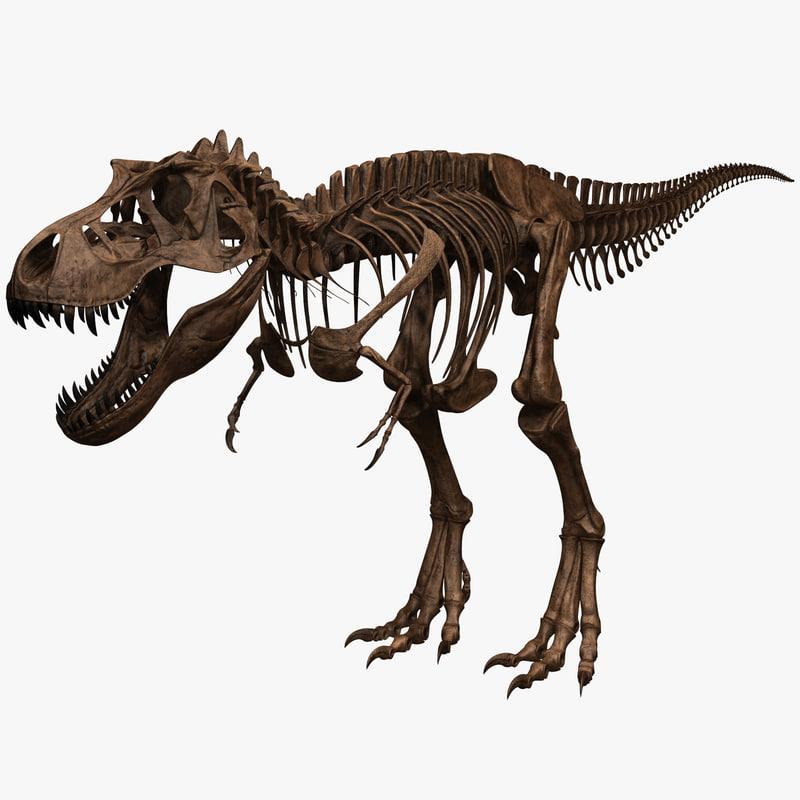 3d tyrannosaurus rex skeleton t rex model for Tyranosaurus rex