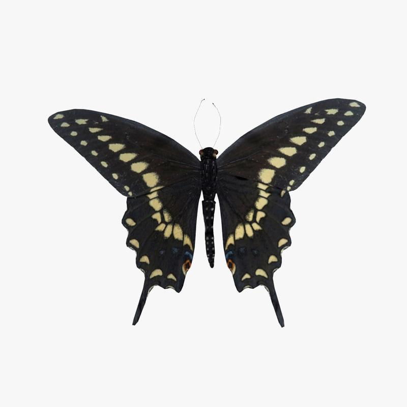 Black_Swallowtail_Butterfly_1.jpg