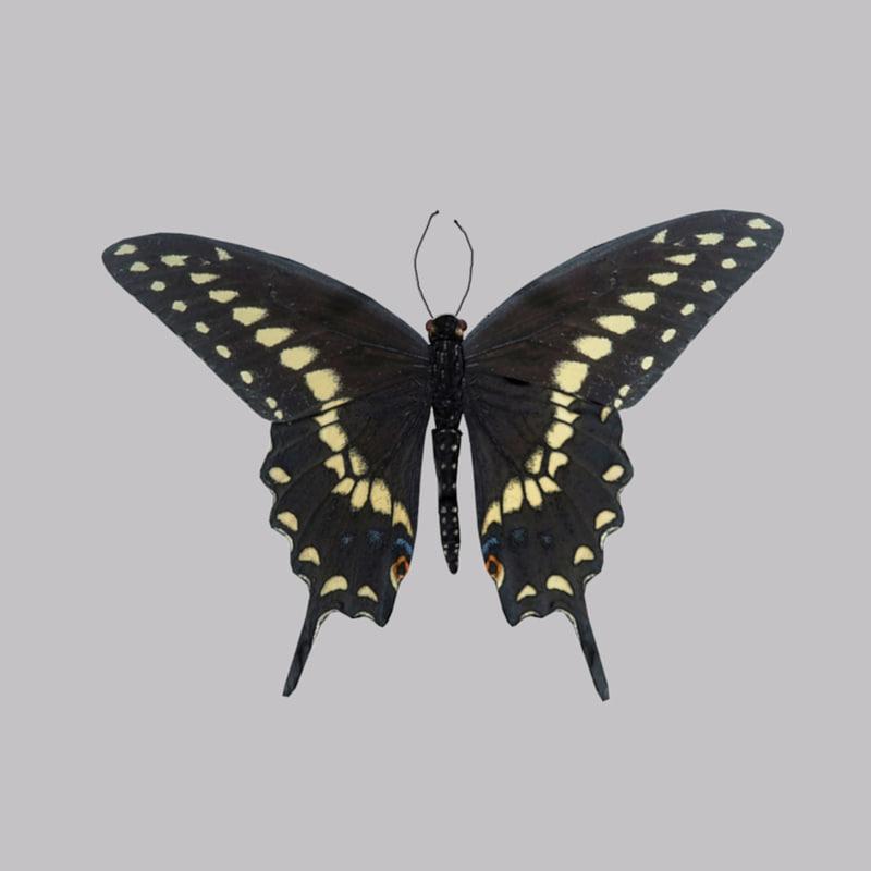Black_Swallowtail_Butterfly_2.jpg