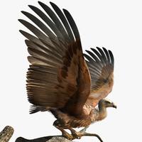 Vulture 3D models