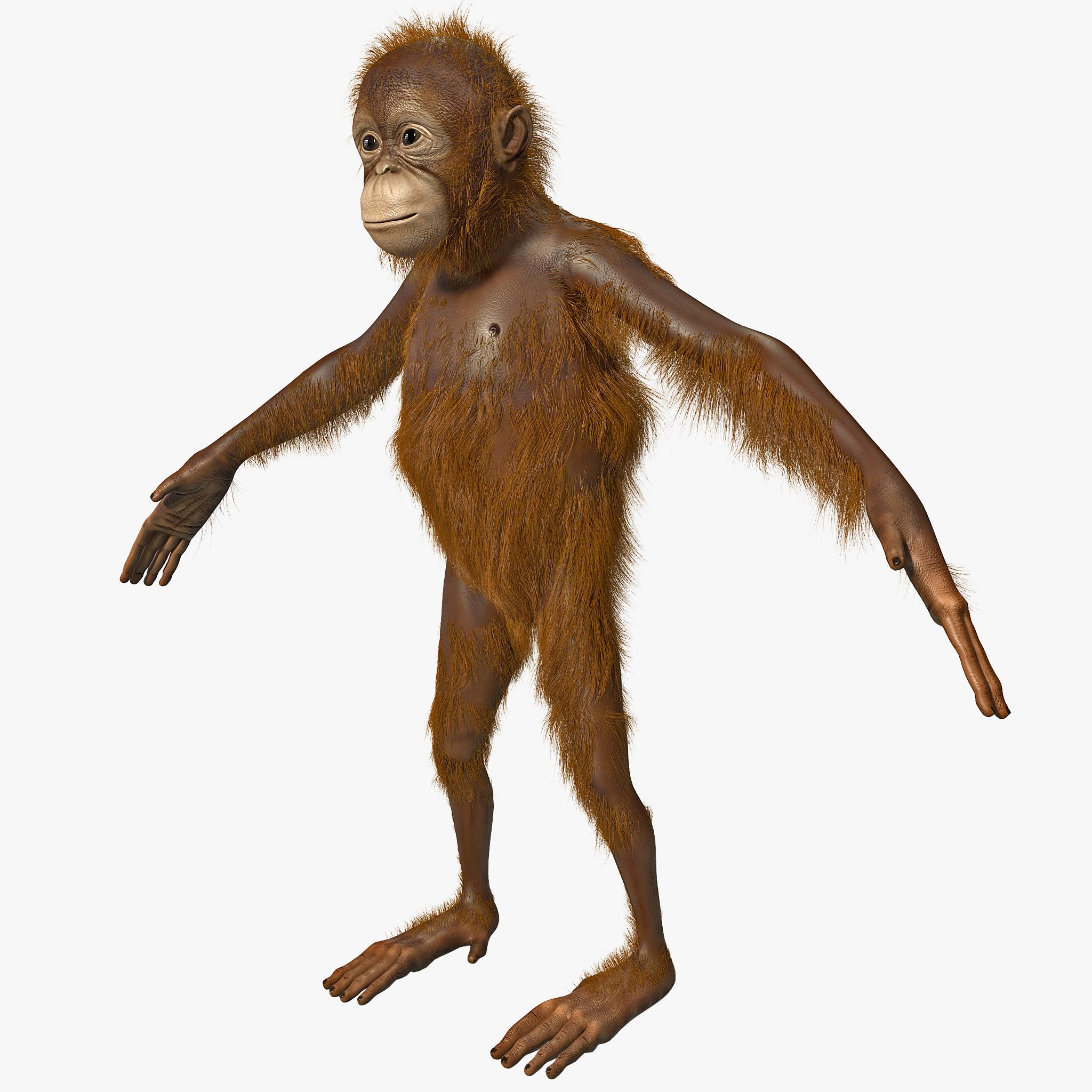 Orangutan-human hentai erotic download