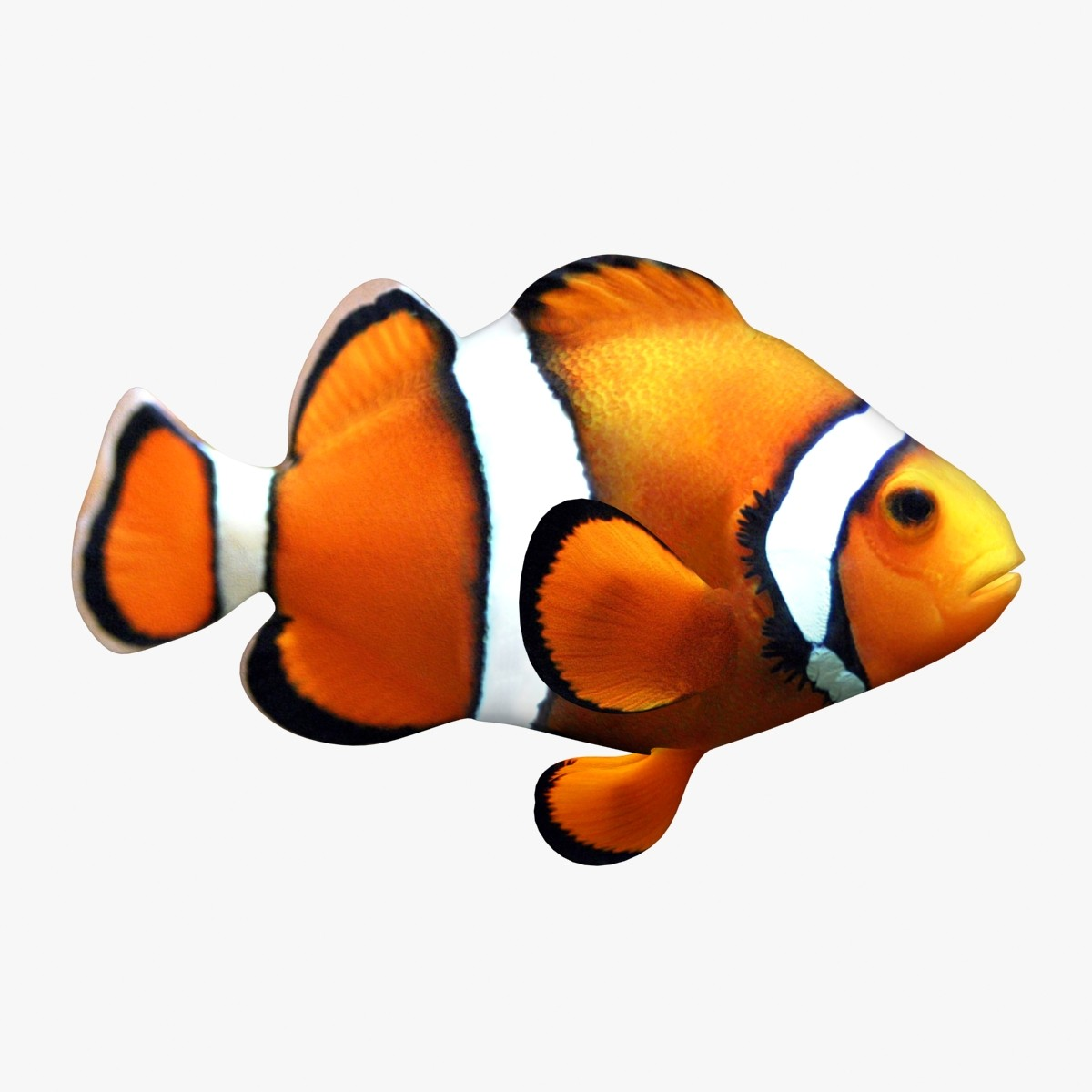 Clown Fish  DriverLayer Search Engine