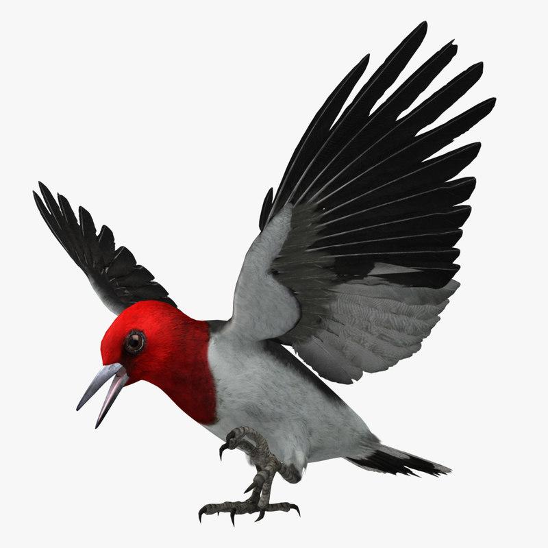 woodpecker_pose2_00.jpg