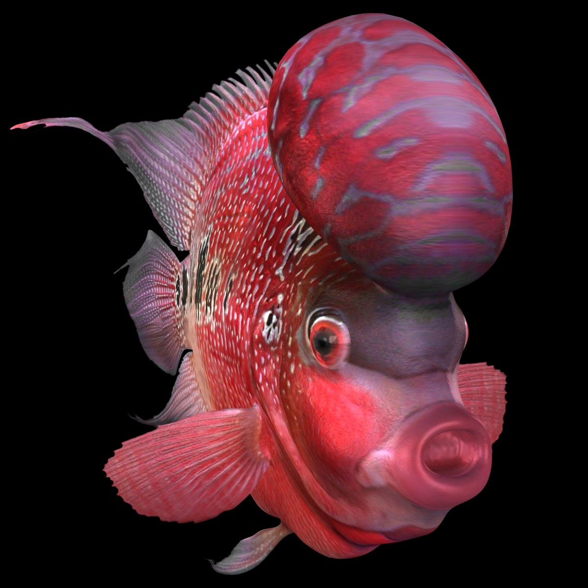 Flowerhorn Fish images