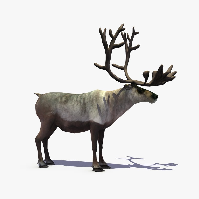 reindeer_signature.png