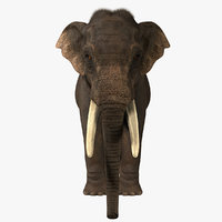 Asian Elephant 3D models