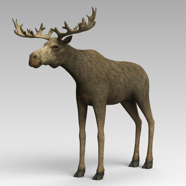 Moose_02.jpg