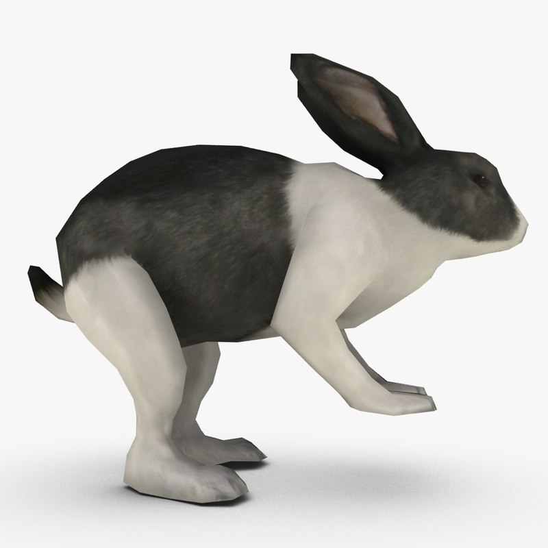 rabbit_signature.png
