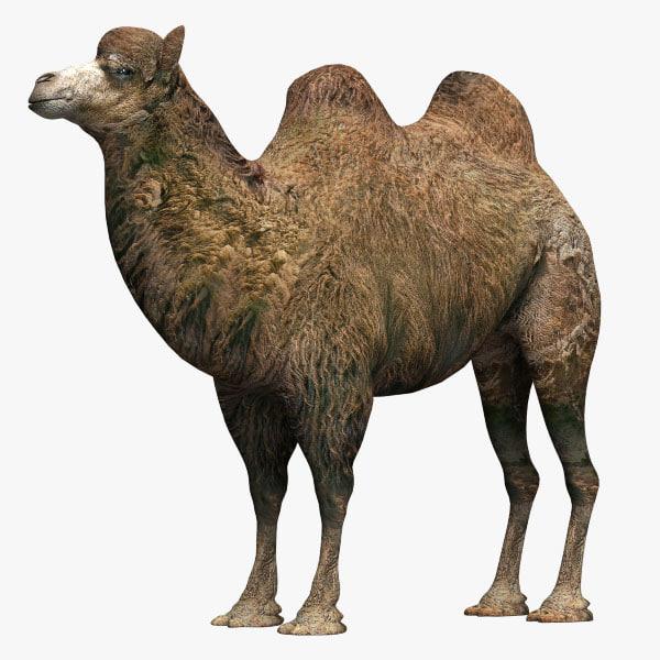 Camel2_01.jpg