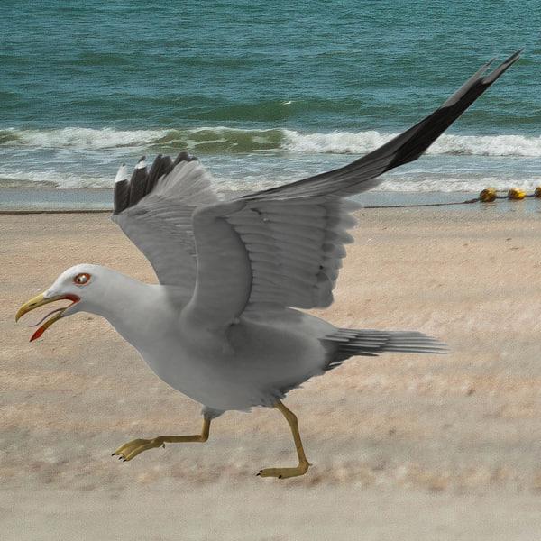 Larus Californicus 'California Gull' 3D Models