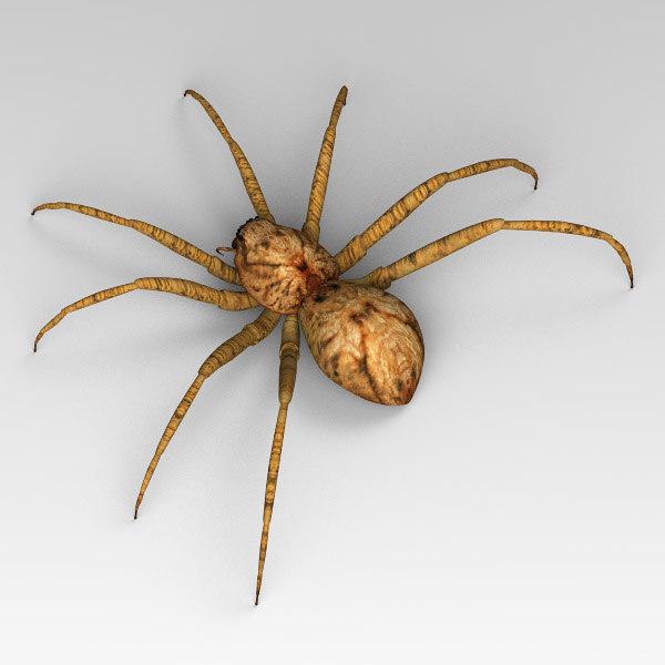 Spider_02.jpg