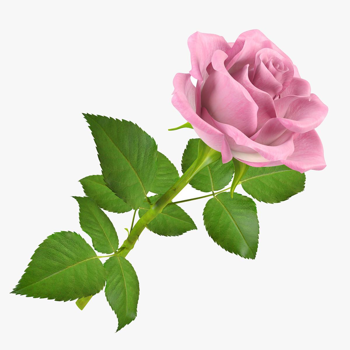 pr_rose6_1_1.jpg