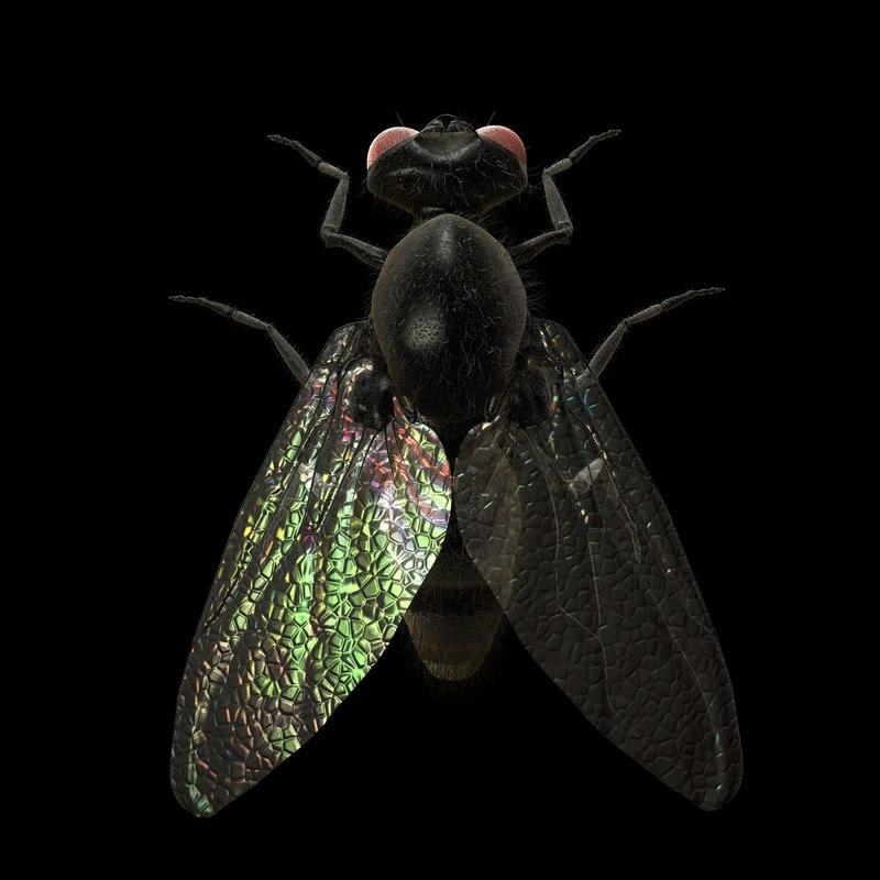 New-Housefly-TS-gfCM-01b.jpg