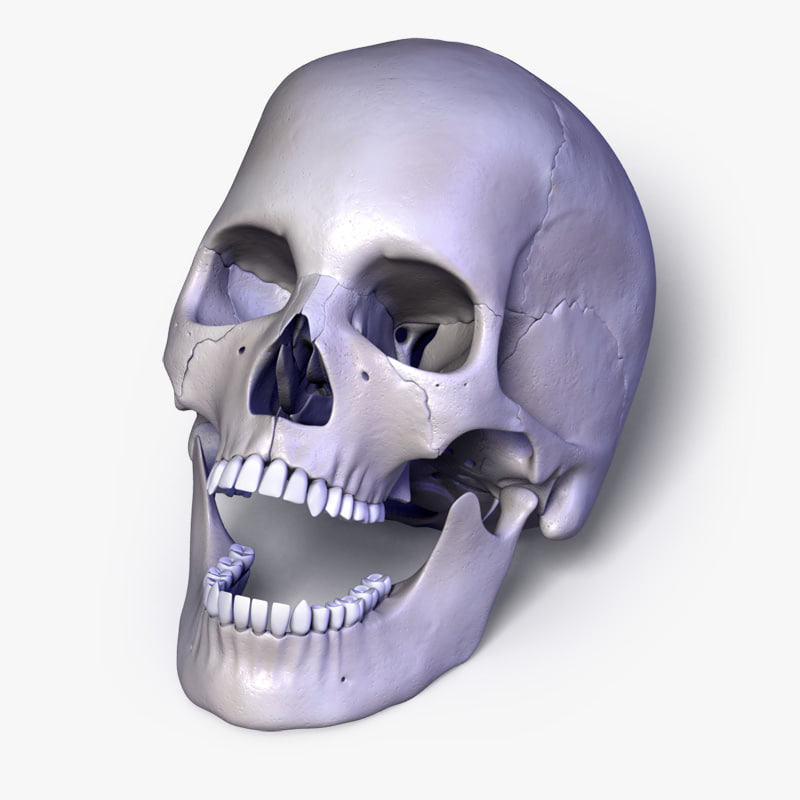 Human_skull_Leo0.jpg