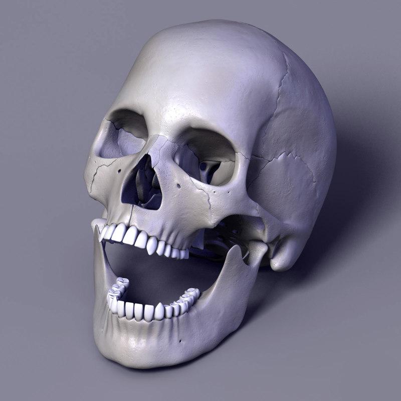 Human_skull_Leo05.jpg