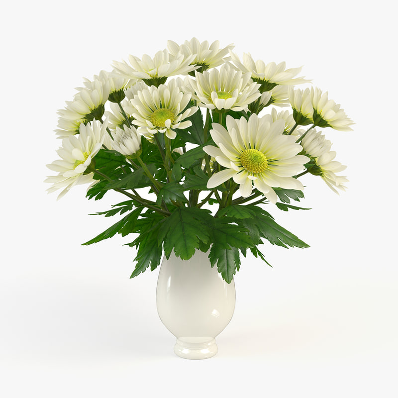 Chrysanthemum in vase