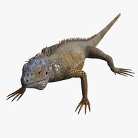 Iguana 3D models