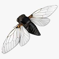 Cicada 3D models