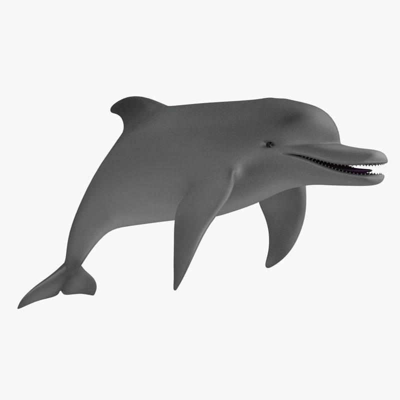 dolphin_th_01.jpg