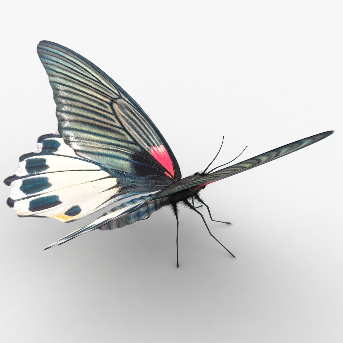Mormon Butterfly Pose 2