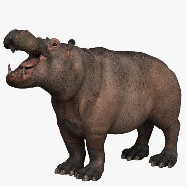 Hippopotamus01.jpg