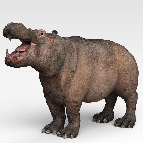 Hippopotamus02.jpg