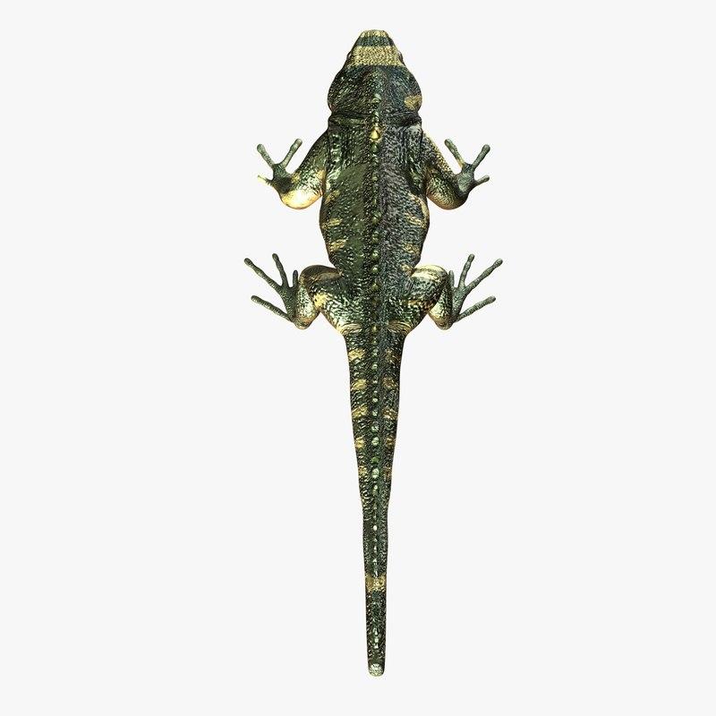 Leguan-TS-gfCM01a.jpg